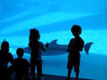 Das Texas State Aquarium in Corpus Christi, Texas    © The McGee